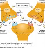 Kết quả hình ảnh cho antidepressant drug mechanism