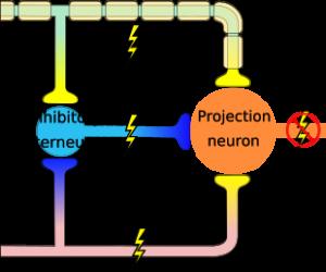 Kết quả hình ảnh cho zona pain mechanism myelin