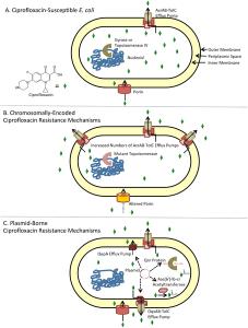Kết quả hình ảnh cho quinolone mechanism resistance