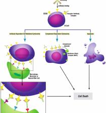 Kết quả hình ảnh cho Rituximab mechanism