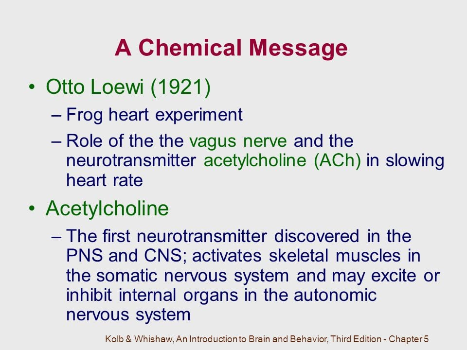 Image may contain: possible text that says 'A Chemical Message Otto Loewi (1921) -Frog heart experiment -Role of the the vagus nerve and the neurotransmitter acetylcholine (ACh) in slowing heart rate Acetylcholine -The first neurotransmitter discovered in the PNS and CNS; activates skeletal muscles in the somatic nervous system and may excite or inhibit internal organs in the autonomic nervous system Kolb& Whishaw, An Introductionto Brain Behavior, Third Edition- Chapter5'